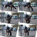 2013_10_03_Pferde